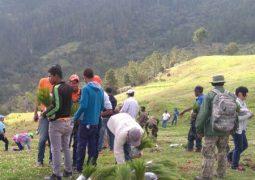 Realizan jornada de reforestación en zona boscosa afectada por incendios