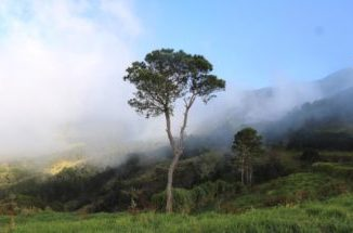 Valle Nuevo, belleza y clima incomparables