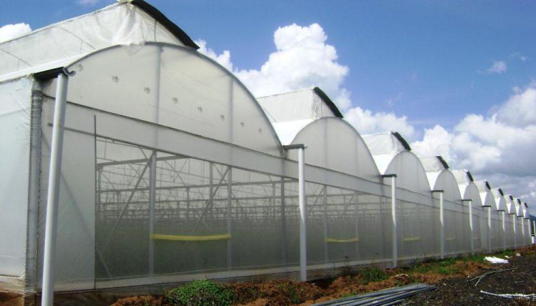 Agricultores de Valle Nuevo dan plazo para que inicie proyecto de invernaderos