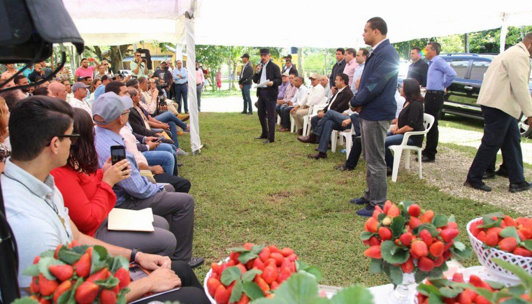 JARABACOA: Danilo financia productores fresas; también a cafetaleros Villa Trina