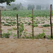 Lluvias dejan cuantiosos daños en el municipio Constanza
