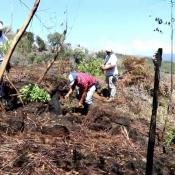 Reforestan zona boscosa afectada por incendio en Constanza