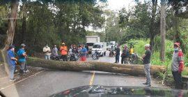 Lluvias provocaron inundaciones y derribo de árboles en Constanza