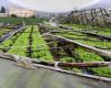 Vientos de la tormenta Isaías afectan estructuras de invernaderos en Tireo