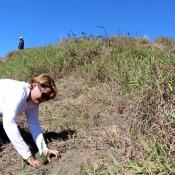 Empresas ALFRIDOMSA e IBT GROUP realizan segunda jornada de reforestación este año en Constanza